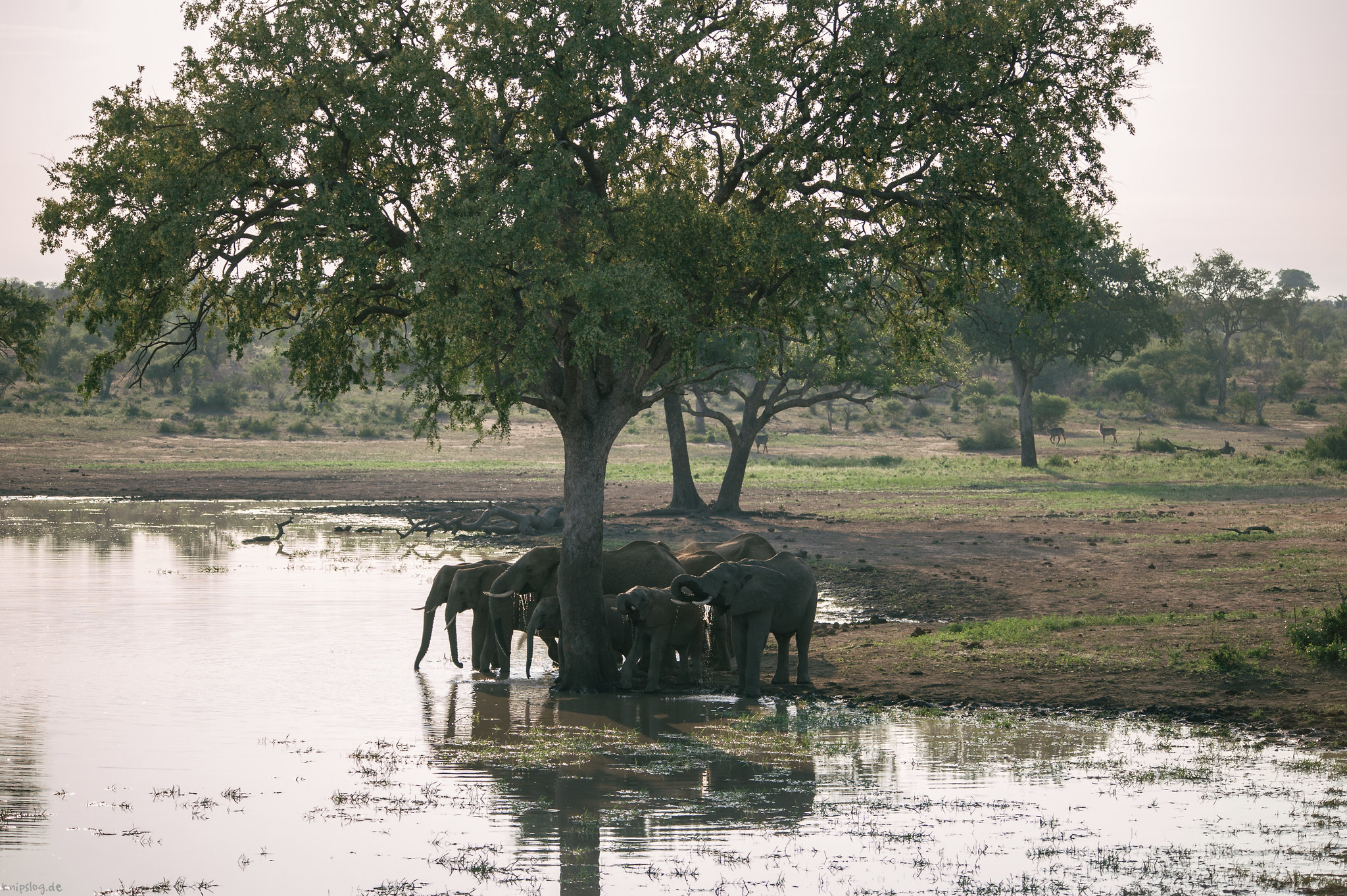 Meeting on the water hole