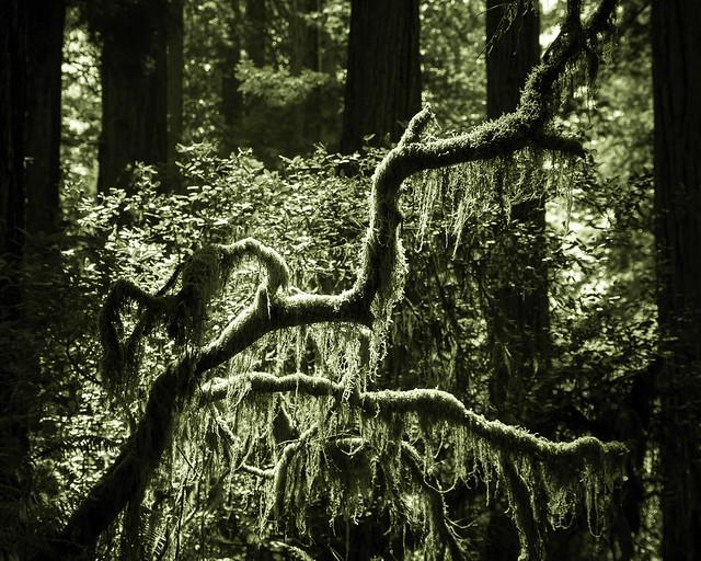 backlit lichen