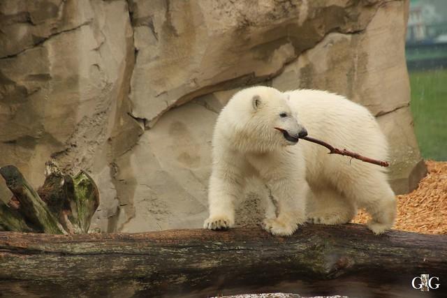 Besuch Zoo am Meer 25.06.201628
