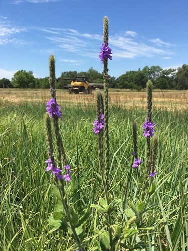 Wildflowers and combines.