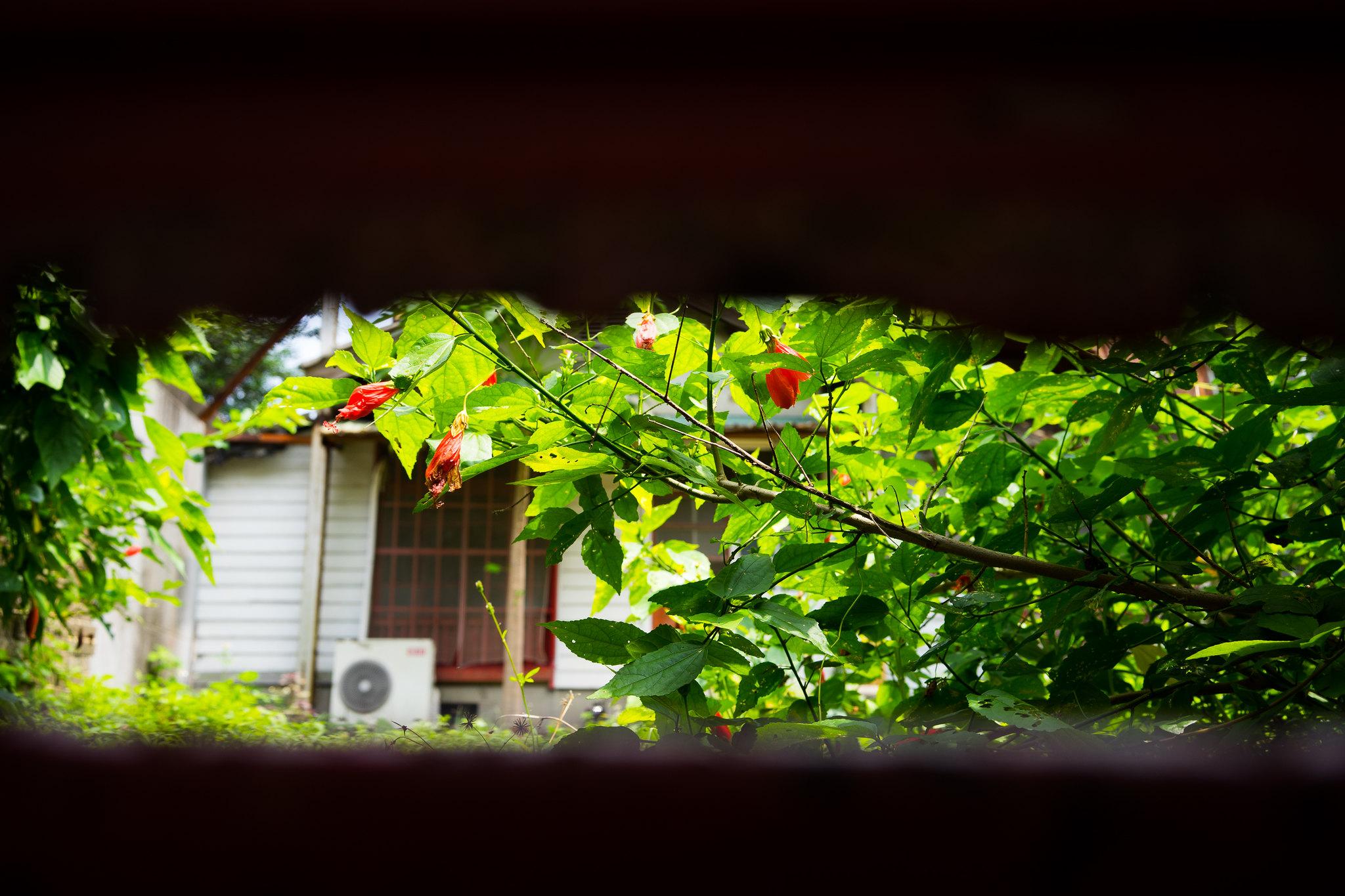 Will Lin Flickr Photo Sharing