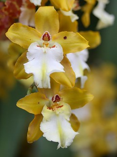 Orchids | by donsutherland1