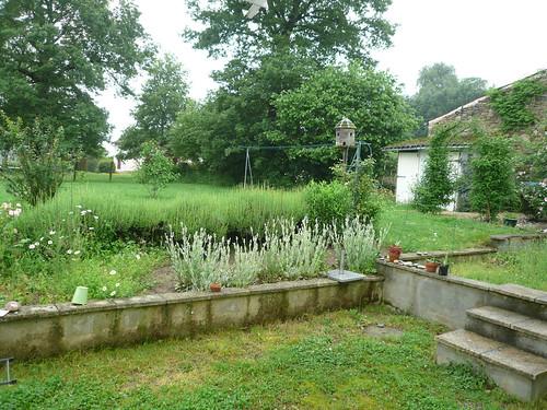 Wet garden 2
