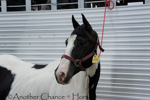 DSC03902 | by Another Chance 4 Horses, Inc.