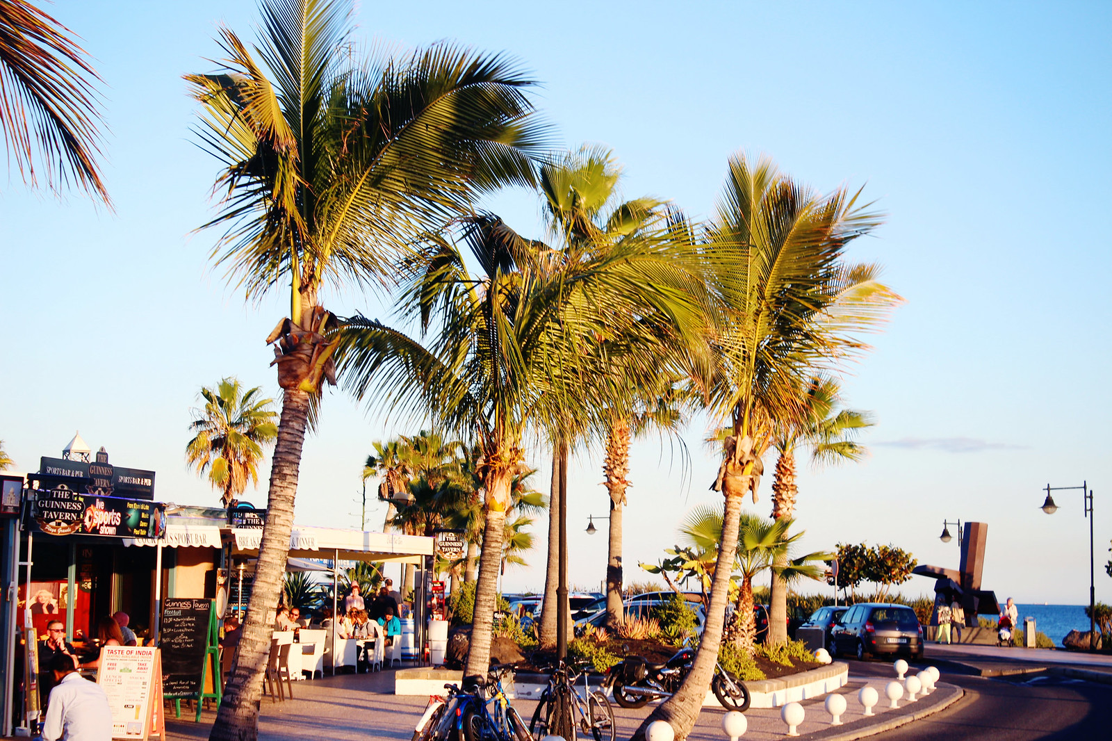 Fuerteventura palms
