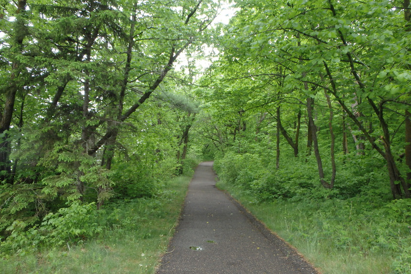 green hardwood trees lining a narrow paved path