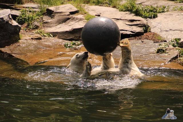 Tierpark Berlin 28.05.2016  0138
