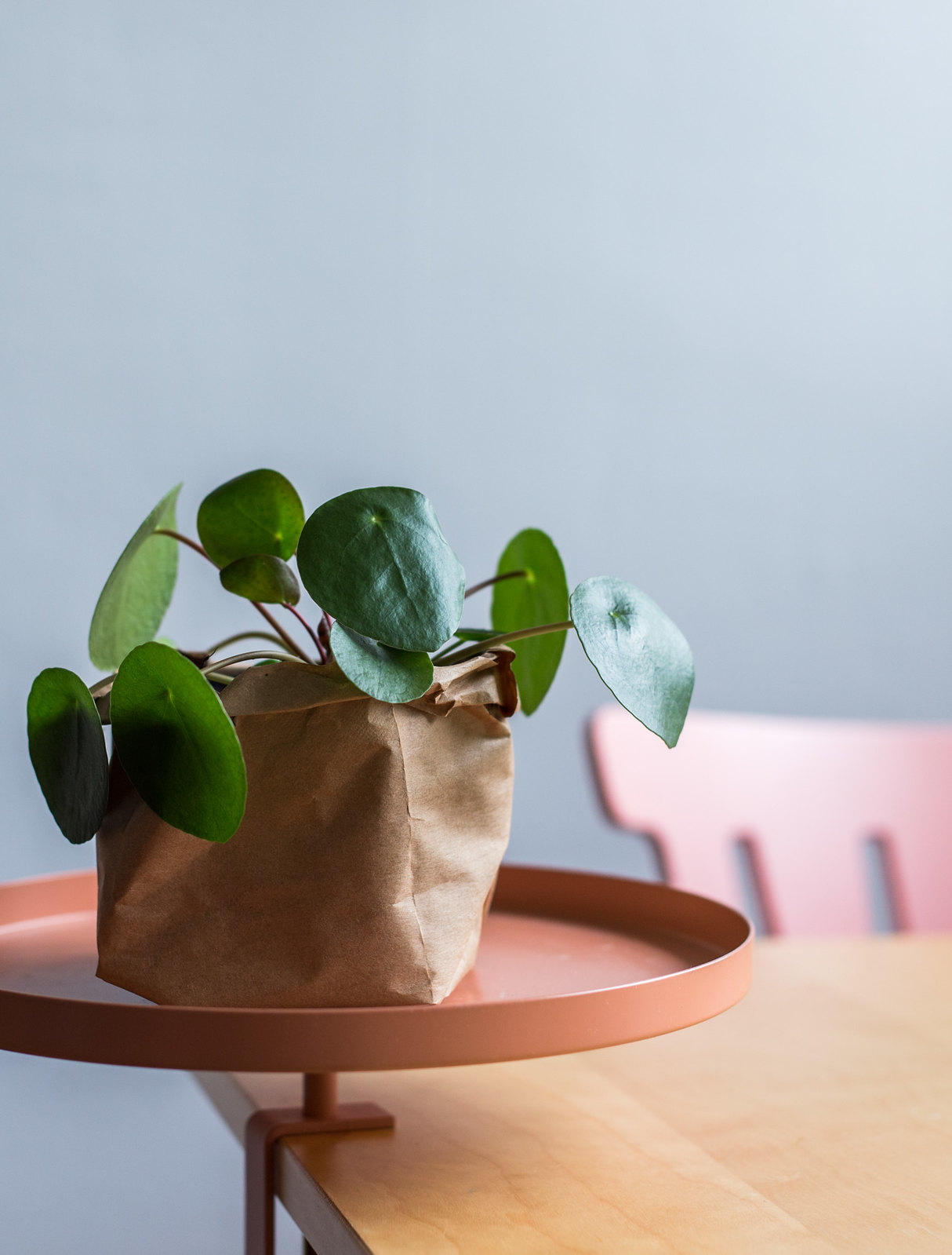 Flower pot out of a grocery bag