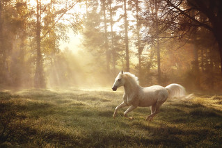 """Dreamland canter"" 