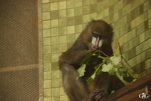Sonntags-Besuch Zoo Berlin 03.07.201632