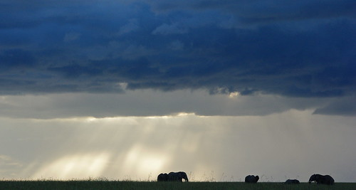 Elephants in Masai Mara by Sarah Ahern | by Exodus Travels - Reset your compass