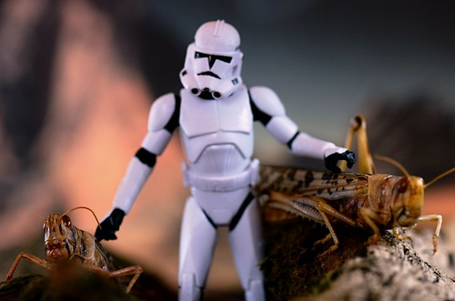 stormtrooper with bugs  (2) | by snapperglenn