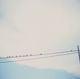 Birds on a Wire | by JoelZimmer