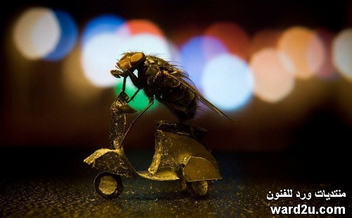 من البوم مغامرات ذبابة طائشة