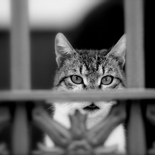 behind of the prison bars, eyes are always hungry for freedom | by Taxydromos69