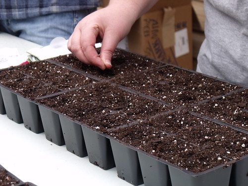 Seed Starting Tip | by Seed Savers