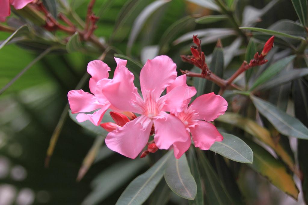 Agios Nikolaos Flowers