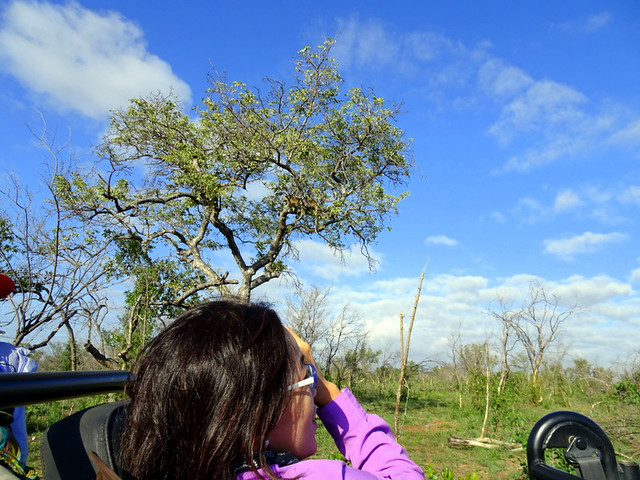 Lion Sands Safari Day 3-013