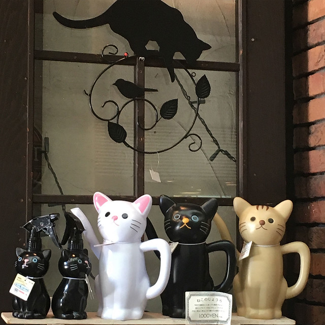 Cat shop, Hiroshima