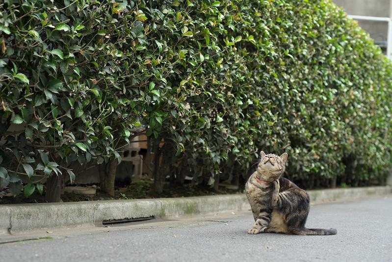東京路地裏散歩 荒川区のネコ 2016年6月25日
