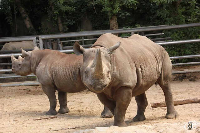 Sonntags-Besuch Zoo Berlin 03.07.201624