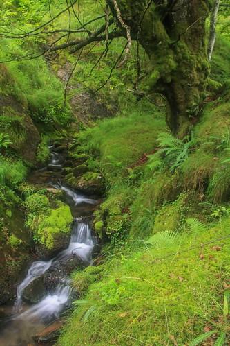 Parque Natural de #Gorbeia #DePaseoConLarri #Flickr - -903