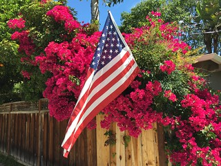 American Flag Willow Glen 8 June 2016