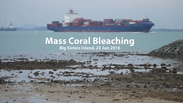 Mass coral bleaching survey at Big Sister's Island, 23 Jun 2016