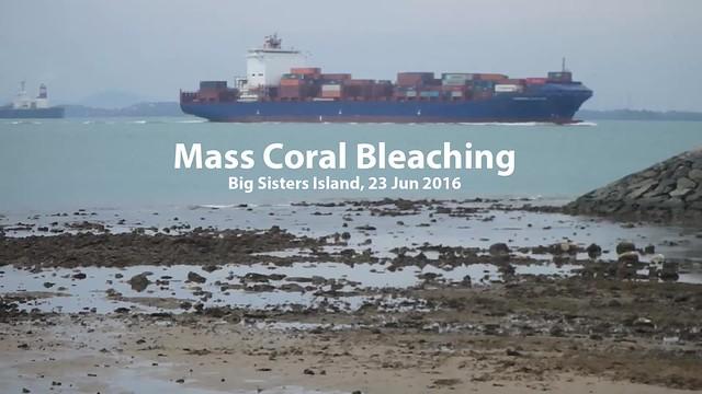 Mass coral bleaching survey at Big Sister's Island, 23 Jun 2016