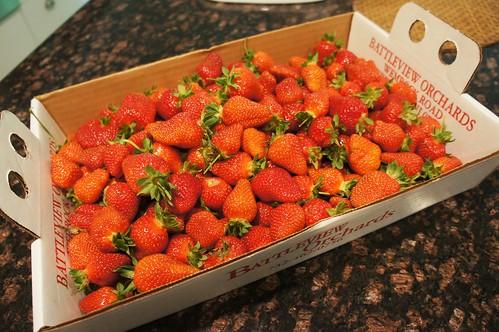Strawberry Picking 2016