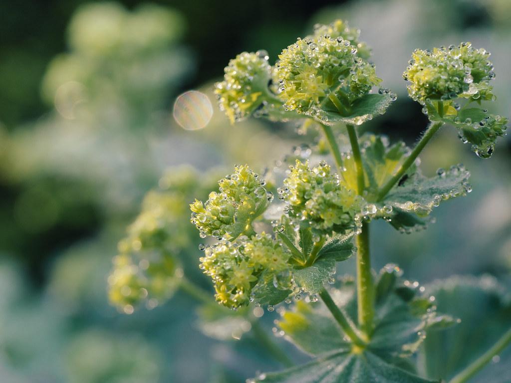 Broccoli ?!