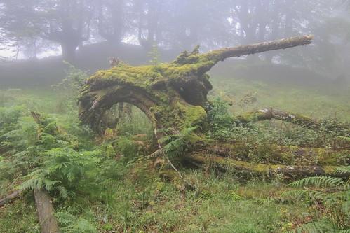Parque Natural de #Gorbeia #Orozko #DePaseoConLarri #Flickr - -626