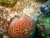Sampling coral microbiome