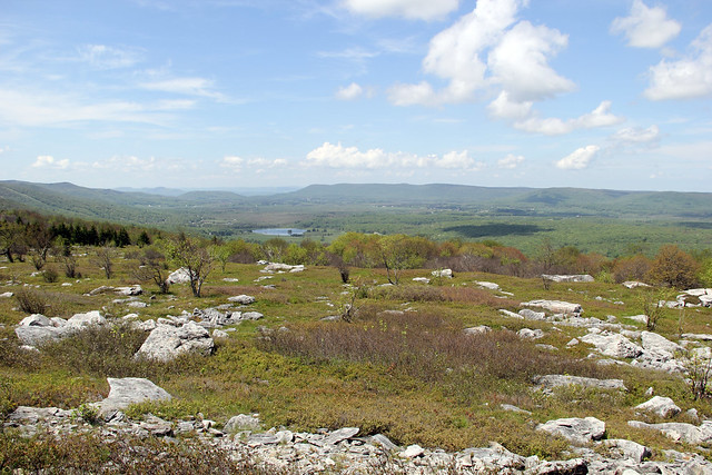 20160527_Dolly_Sods_155