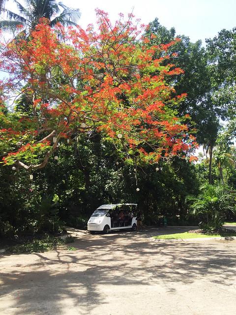 Patty Villegas - The Lifestyle Wanderer - Club Balai Isabel - Talisay - Batangas - Travel South -29