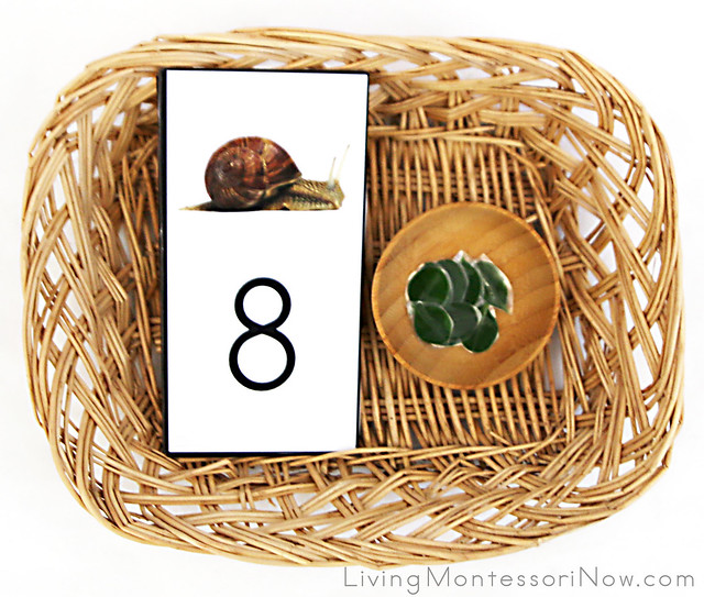 Feed the Snail Counting Basket
