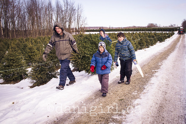 Christmas Tree Quest 2013