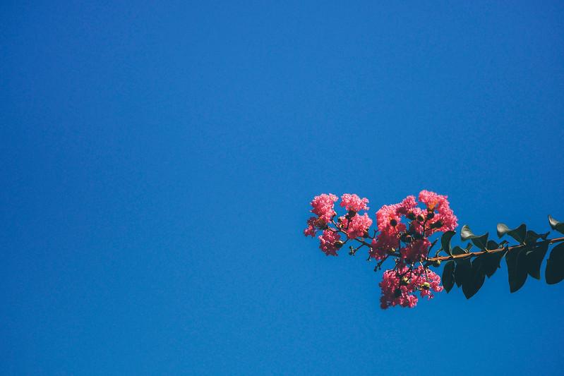 FLOWERS 花花|PEN-F PENF