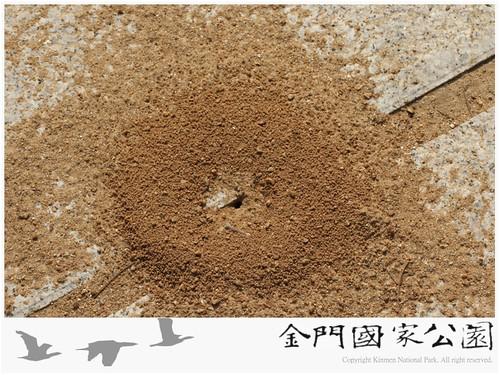 日本黑山蟻蟻巢口