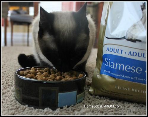 Canin Cat Food