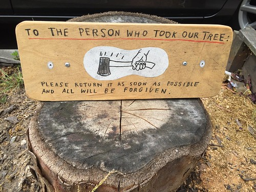 To the person who took our tree