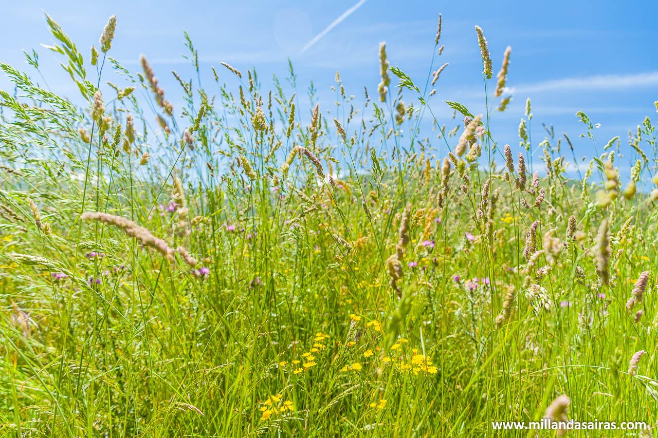 Llega el verano en el entorno de Vilanova y sus minas de wolframio