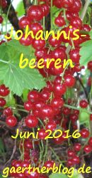Garten-Koch-Event Juni 2016: Johannisbeeren [30.06.2016]