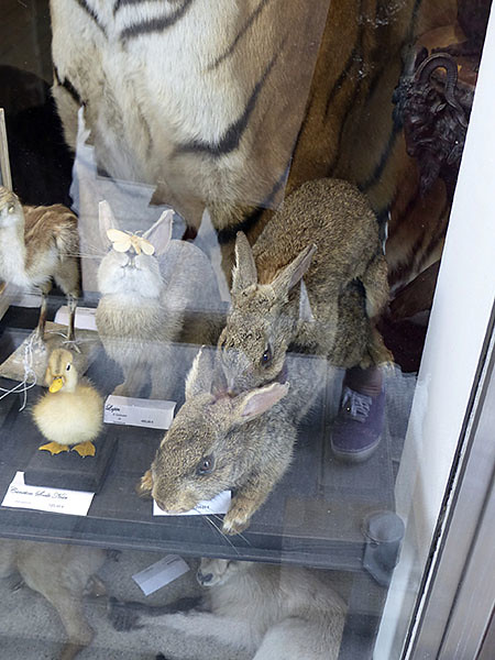 chauds lapins