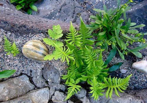 Ferns,rocks
