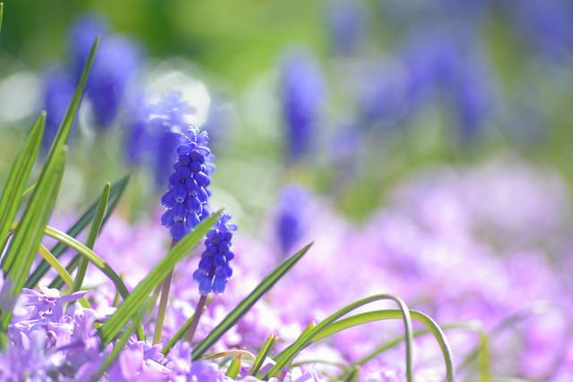 spring flower 6