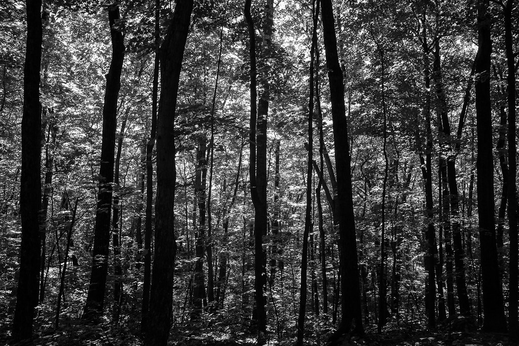 Dense forest on the Appalachian Trail