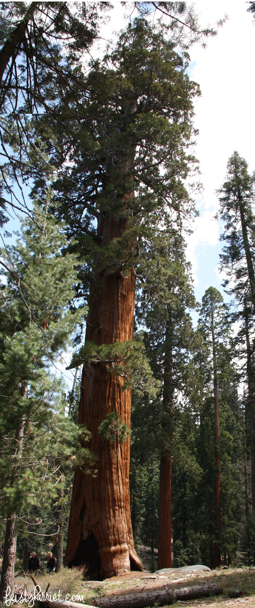 Sequoia National Park_feistyharriet_May 2016 (1)