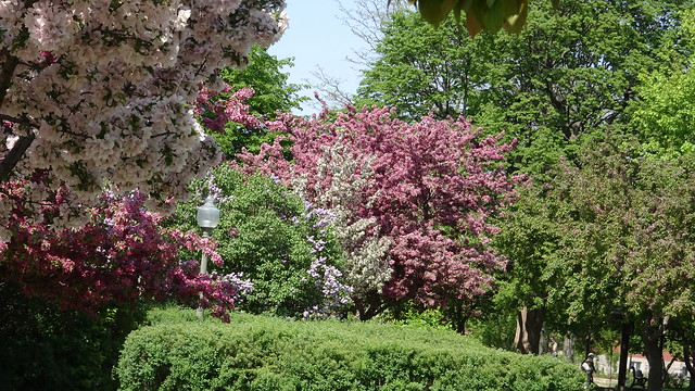 Every Colour Blossoms
