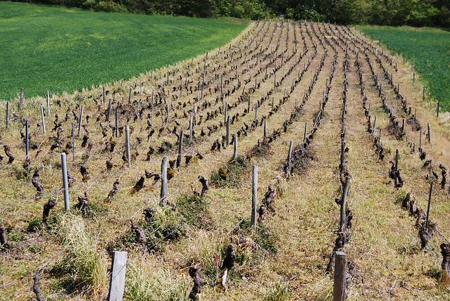 Druivenakker, Burnand, Bourgogne...